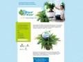 Plant'airpur : Le pouvoir purificateur des plantes d'intérieur