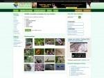 Visoflora - La nature et le jardinage par des passionnés : identification, fiches, forums, ...
